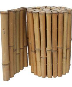 Bambu Kant